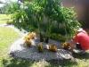 landscapingverobeach